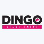 Dingo Recruitment